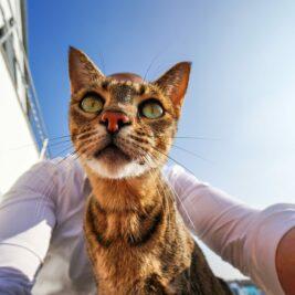 Wanda Selfie